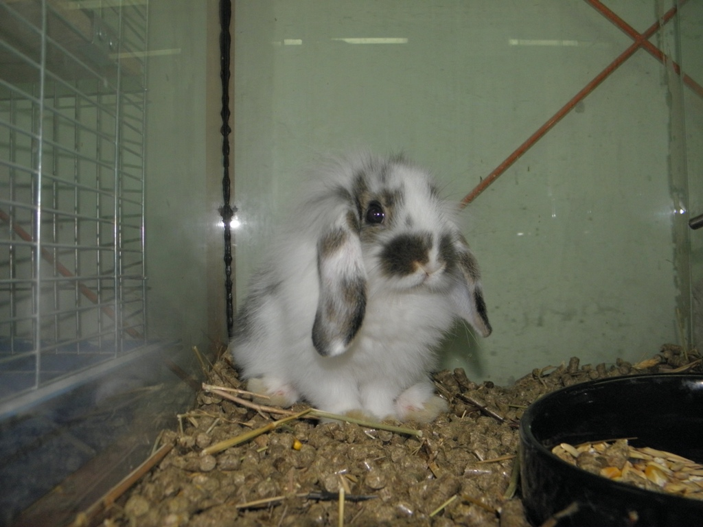 Как кормить декоративного кролика в домашних условиях 465
