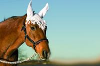 шапочка на лошади