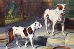 Вымершие породы собак